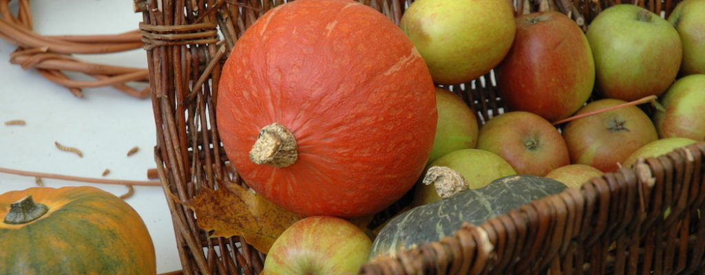 Apple Day 2016 - Gauds and pumpkins